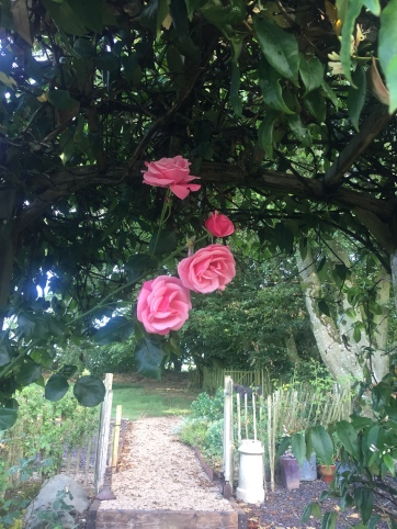 Climbing rose on trellis going up to woodland