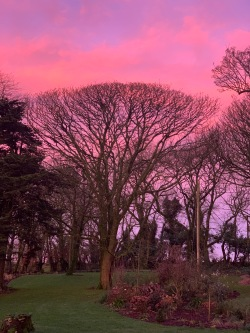A recent pink dawn